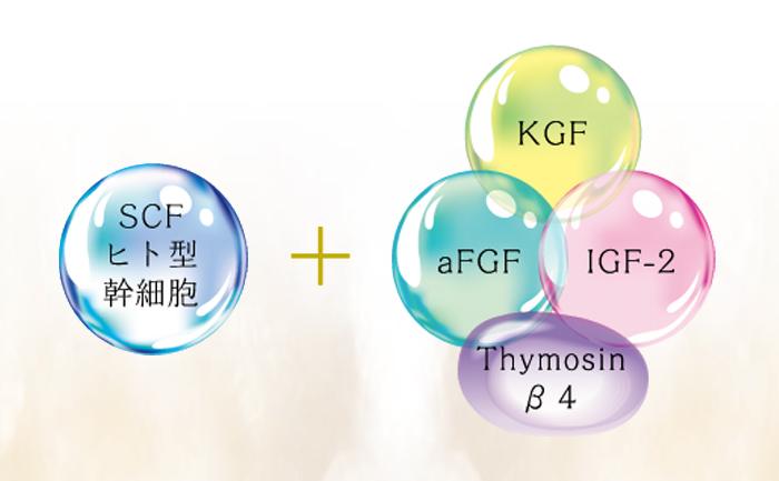 5大ヒト型ペプチド成分配合