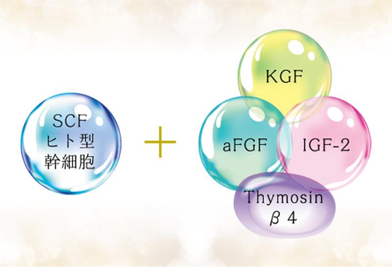 ヒト型幹細胞を原液で配合